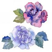Kék és lila Rózsa virág botanikai virág. Vad tavaszi levél vadvirág elszigetelt. Akvarell háttér illusztráció készlet. Akvarell rajz divat aquarelle. Elszigetelt Rózsa ábra elem.