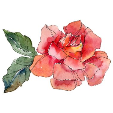 Red Rose floral botanical flower. Wild spring leaf wildflower isolated. Watercolor background illustration set. Watercolour drawing fashion aquarelle. Isolated rose illustration element.