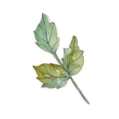 Rose green leaves rose floral botanical flowers. Wild spring leaf wildflower isolated. Watercolor background set. Watercolour drawing fashion aquarelle. Isolated rose illustration element.