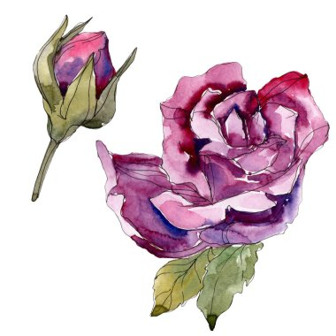 Purple rose floral botanical flowers. Wild spring leaf wildflower isolated. Watercolor background illustration set. Watercolour drawing fashion aquarelle. Isolated rose illustration element.