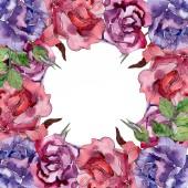 Lila és piros rózsa virág botanikai virágok. Vad tavaszi levél vadvirág elszigetelt. Akvarell háttér illusztráció készlet. Akvarell rajz divat aquarelle. Test határ Dísz tér.