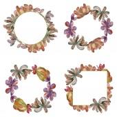 Jungle sukulentní květinové botanické květin. Divoký jarní listové wildflower izolován. Sada akvarel pozadí obrázku. Akvarel, samostatný výkresu módní aquarelle. Frame hranice ozdoba náměstí.