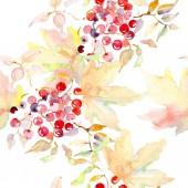 Fotografie Kytice podzimní lesní plody. Divoký jarní listové izolované. Sada akvarel ilustrace. Akvarel, samostatný výkresu módní aquarelle. Vzor bezešvé pozadí. Fabric tapety tisku textura