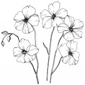 Vektor Flachs florale botanische Blume. wildes Frühlingsblatt Wildblume isoliert. Schwarz-weiß gestochene Tuschekunst. isolierte Flachs Illustration Element auf weißem Hintergrund.