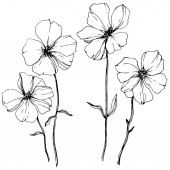 Photo Vector Flax floral botanical flower. Wild spring leaf wildflower isolated. Black and white engraved ink art. Isolated flax illustration element on white background.