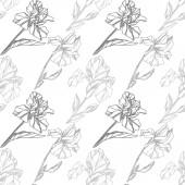 Vektor virág botanikai Irisz. Vad tavaszi levél vadvirág elszigetelt. Szürke és fehér gravírozott tinta art. Varratmentes háttérben minta. Anyagot a nyomtatási textúrát.