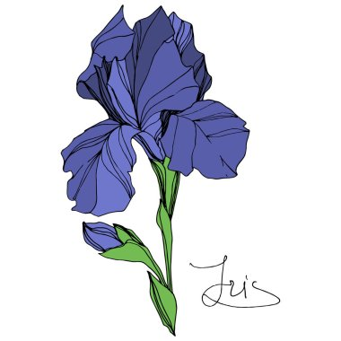 Vector Blue iris floral botanical flower. Wild spring leaf wildflower isolated. Blue and green engraved ink art. Isolated iris illustration element on white background. stock vector