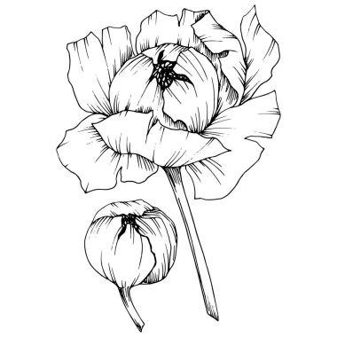 Vector Peony floral botanical flower. Wild spring leaf wildflower isolated. Black and white engraved ink art. Isolated peony illustration element. stock vector