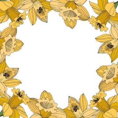 Vector Yellow Narcissus floral botanical flower. Wild spring leaf wildflower isolated. Egraved ink art. Frame border ornament square. clip art vector