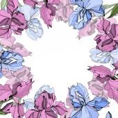 Vektorové růžová a modrá iris květinové botanické květin. Divoký jarní listové wildflower izolován. Ryté inkoust umění. Frame hranice ozdoba náměstí.