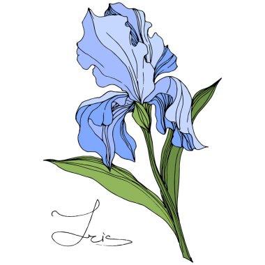 Vector Blue Iris isolated on white. Engraved ink art. Isolated iris illustration element on white background. stock vector