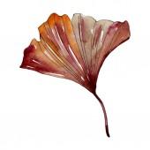 Green red ginkgo biloba leaf. Watercolor background illustration set. Isolated gingko illustration element.
