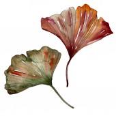 Zelené červené ginkgo biloba listy. Sada akvarel pozadí obrázku. Prvek ilustrace izolované Ginkgo.