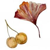 Green red ginkgo biloba leaves. Watercolor background illustration set. Isolated gingko illustration element.
