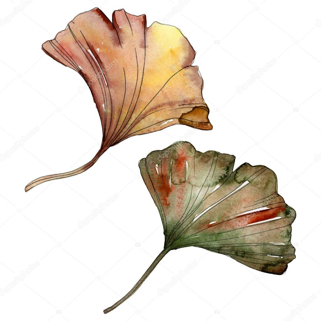 Green and red ginkgo biloba leaves isolated on white. Watercolor illustration set. stock vector