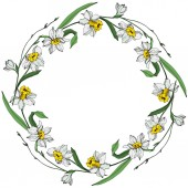 Fotografie Vector White narcissus flowers with green leaves. Engraved ink art on white background. Frame border ornament with copy space.
