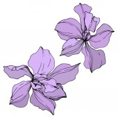 Photo Vector violet orchid flowers isolated on white. Engraved ink art.
