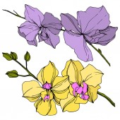 Fotografie Vector yellow and violet orchid flowers isolated on white. Engraved ink art.
