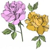 Vektor lila és sárga Rózsa virágok zöld levelek elszigetelt fehér.