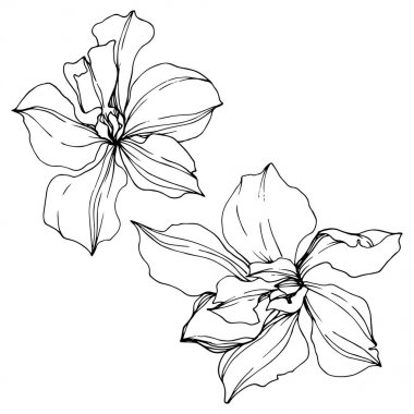 Vector black orchid flowers isolated on white. Engraved ink art. clip art vector