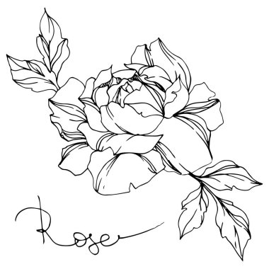 Vector black and white rose with leaves illustration element clip art vector
