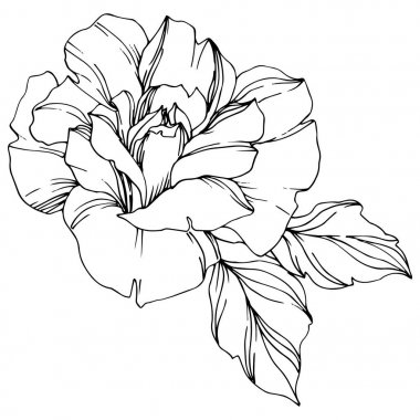 Vector black and white rose with leaves illustration element