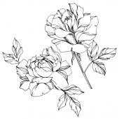Vektor fekete-fehér Rózsa levelei illusztráció elemek