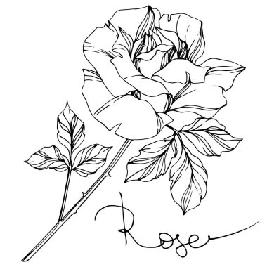 Vector black and white rose with leaves illustration element stock vector
