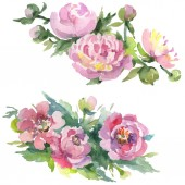 Bouquets of peonies with green leaves isolated on white. Watercolor background illustration set.
