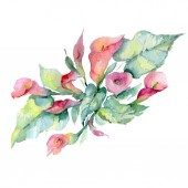 Bouquet of pink flowers with green leaves isolated on white. Watercolor background illustration elements.