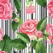 Fotografia Pink camellia flowers with green leaves on white background with black lines. Watercolor illustration set. Seamless background pattern.