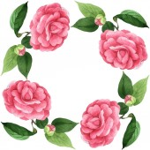Photo Pink camellia flowers with green leaves isolated on white. Watercolor background illustration set. Empty frame with copy space.