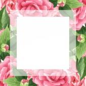 Pink kamélia virágok zöld levelek elszigetelt fehér. Akvarell háttér illusztráció meg. Üres keret másolási térközzel.