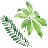 Exotické tropické havajské zelené palmy zanechává izolaci v bílém. Vodní barva-množina pozadí.