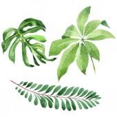 exotische tropische hawaiianische grüne Palmenblätter isoliert auf weiß. Aquarell Hintergrund Set.