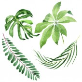 Exotic tropical hawaiian green palm leaves isolated on white. Watercolor background set.