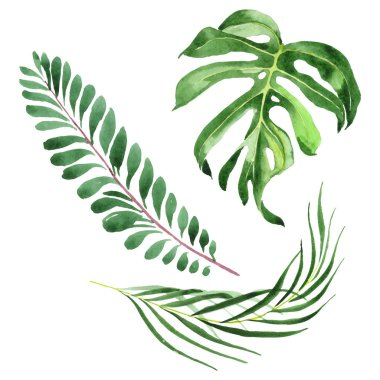 Exotic tropical hawaiian green palm leaves isolated on white. Watercolor background set. stock vector