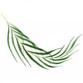 Egzotikus trópusi Hawaii zöld Pálma levelek elszigetelt fehér. Akvarell háttér-készlet.