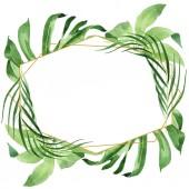 Exotické tropické havajské zelené palmy zanechává izolaci v bílém. Barevné pozadí. Rámec s prostorem pro kopírování.