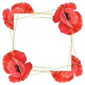 Red poppies isolated on white. Watercolor background illustration set. Frame with flowers and copy space.