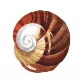 Seashell tropický prvek izolovaný na bílém. Barevné pozadí – ilustrace