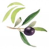Photo Fresh olive with green leaves isolated on white watercolor background illustration elements