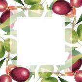 Fresh olives with green leaves isolated on white watercolor background illustration. Frame ornament with copy space.