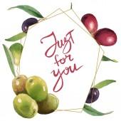 Čerstvé olivy se zelenými listy izolované na pozadí bílé akvarel. Ozdobná orámovaná pouze pro písmena.
