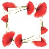 Červené makky izolované na bílém. Vodný obrázek pozadí-barevný. Rám s květinami a prostorem pro kopírování.