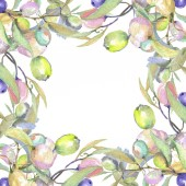 Olive branches with green fruit and leaves isolated on white. Watercolor background illustration set. Frame ornament with copy space.