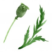 Fotografie Poppy flower bud with green leaf isolated on white. Watercolor background illustration set.