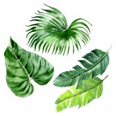 Exotic tropical hawaiian palm tree leaves isolated on white. Watercolor background illustration set.