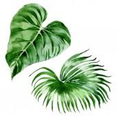 Egzotikus trópusi Hawaii pálmafa levelek elszigetelt fehér. Akvarell háttérillusztráció-készlet.