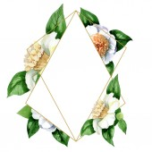 White camellia flowers with green leaves isolated on white. Watercolor background illustration set. Frame border ornament with copy space.